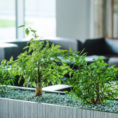 Switchscene | Commercial Wallpaper | Plants in Office